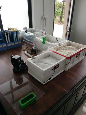 上海浦东新区养殖孵化机