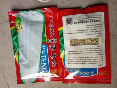 江苏省徐州市沛县玉米种子
