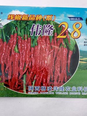 陕西省宝鸡市岐山县线椒种子 80%以上 常规种