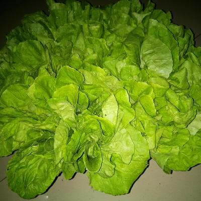 河北省沧州市任丘市义和秋 1斤以下 净菜