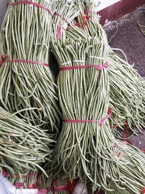 山东省潍坊市临朐县长豇豆 40cm以上 不打冷
