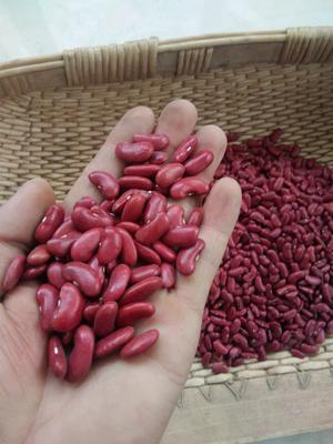 山西省忻州市岢岚县大红豆 纯粮率≥98% 袋装