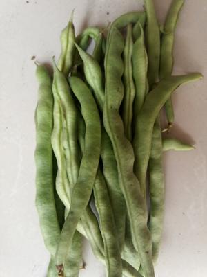 湖北省鄂州市鄂城区绿扁豆 1cm以上 15cm以上