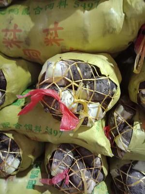 广东省广州市白云区粉芋头 6cm以上