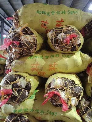 广东省广州市白云区粉芋头 4cm以上