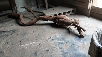 四川省泸州市泸县野生葛根 4.5斤以上