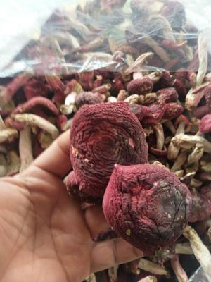 云南省西双版纳傣族自治州景洪市干红菇 袋装 1年以上