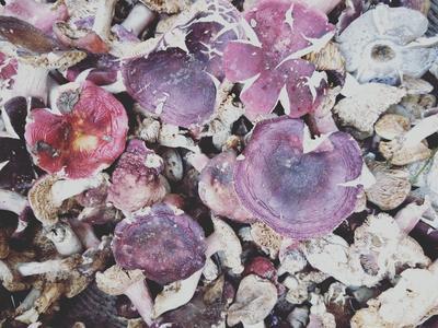 河南省南阳市南召县干红蘑菇 散装 半年