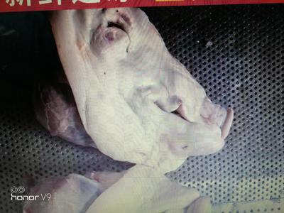 湖南省永州市冷水滩区猪头肉 简加工