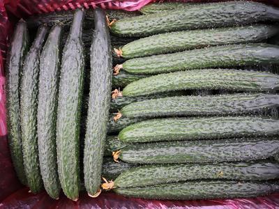 云南省红河哈尼族彝族自治州泸西县密刺黄瓜 30cm以上 干花带刺