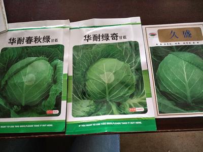 河北省邯郸市曲周县包菜种子
