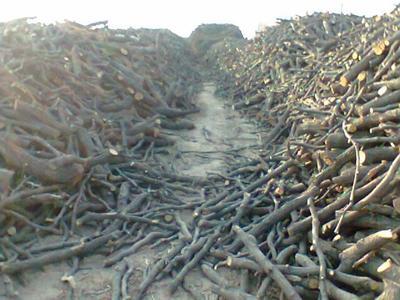 广东省茂名市电白区果木木炭