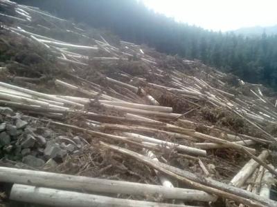 这是一张关于杉木的产品图片