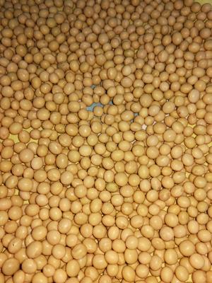 黑龙江省绥化市海伦市东北黑龙江大豆 生大豆 1等品