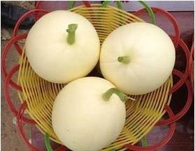 河南省许昌市鄢陵县白沙蜜甜瓜 0.5斤以上