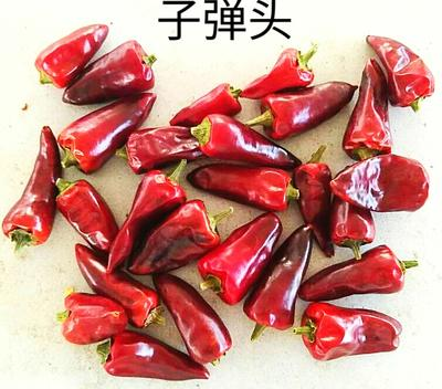贵州省遵义市绥阳县子弹头干辣椒