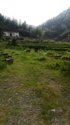 江西省赣州市兴国县土蜂蜜 塑料瓶装 100% 2年以上