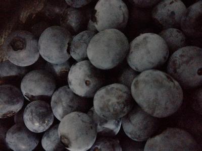 浙江省绍兴市上虞区莱格西蓝莓 鲜果 4 - 6mm以上