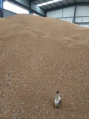 河北省衡水市桃城区普通小麦