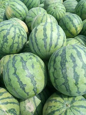 这是一张关于甜宝西瓜 有籽 1茬 9成熟 5斤打底的产品图片