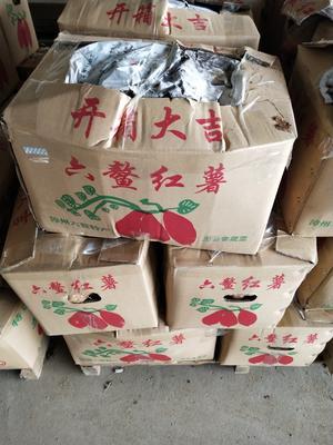 福建省漳州市漳浦县红心红薯 红皮 4两以上