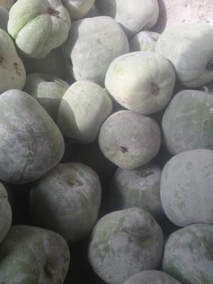 山东省济宁市金乡县一串铃冬瓜 2斤以上 白霜