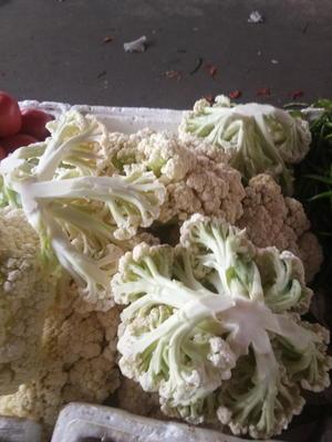 江苏省南京市江宁区有机松花菜 适中 2~3斤 乳白色