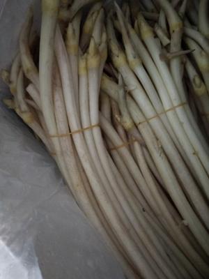 广东省广州市花都区洪湖藕带 30~50cm