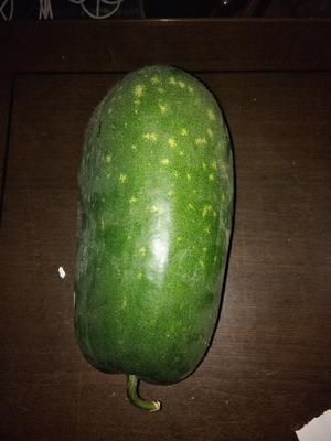 山东省济宁市兖州区一串铃冬瓜 2斤以上 硬毛