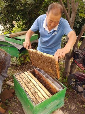 陕西省西安市长安区中蜂