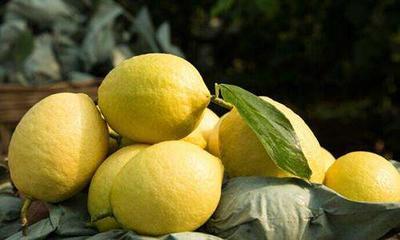 云南省西双版纳傣族自治州景洪市尤力克柠檬 3.3 - 4.5两