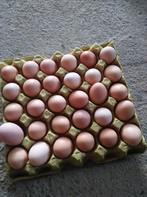河南省商丘市梁园区土鸡蛋 食用 箱装