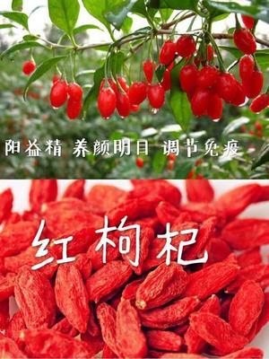 青海省海西蒙古族藏族自治州格尔木市青海枸杞 特级