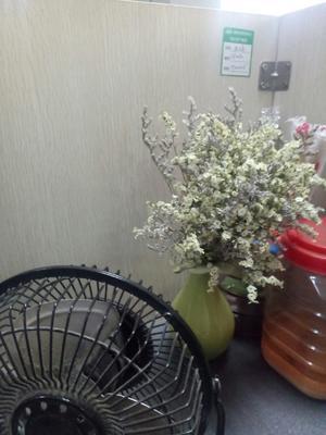 湖南省长沙市芙蓉区麻皮八月瓜 种植 60g以下