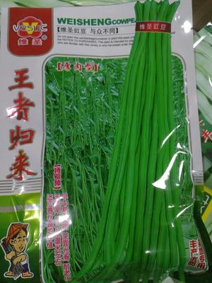 山东省临沂市兰山区豆角种子 ≥95%