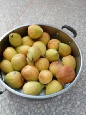 江苏省盐城市滨海县水果无花果 50-60克