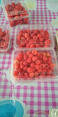 黑龙江省哈尔滨市尚志市红树莓 鲜果
