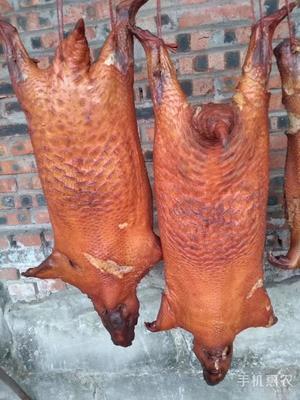 这是一张关于云南豪猪 20-30斤的产品图片