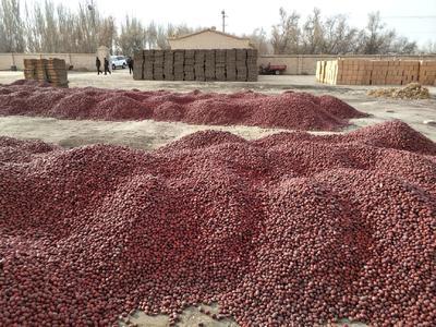 新疆维吾尔自治区图木舒克市图木舒克市灰枣 统货
