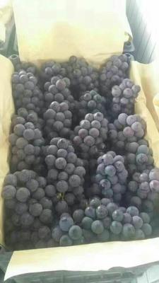 这是一张关于京亚葡萄 5%以下 1次果 1.5- 2斤的产品图片