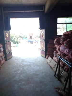陕西省渭南市大荔县紫皮大蒜 4.5-5.0cm 多瓣蒜