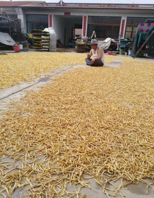 山西省大同市南郊区黄花菜干 3-6个月