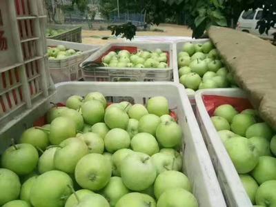这是一张关于美八苹果 膜袋 片红 75mm以上的产品图片
