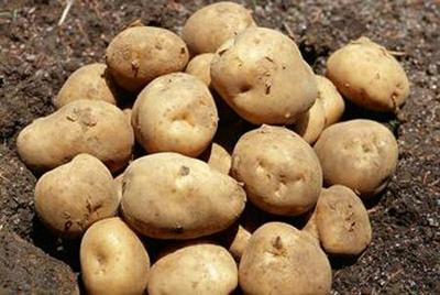 河北省衡水市桃城区定西马铃薯 4两以上