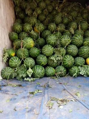 这是一张关于冠龙西瓜 有籽 1茬 9成熟 8斤打底的产品图片