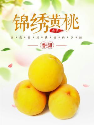 浙江省嘉兴市嘉善县锦绣黄桃苗 1.0米