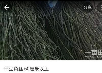 山东省菏泽市成武县干豆角 12-18个月