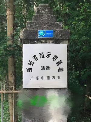 广东省清远市清城区大平2号