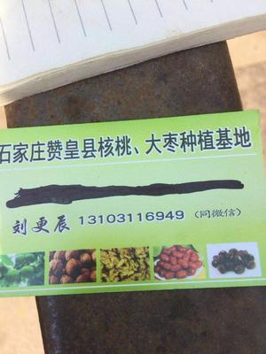 河北省石家庄市赞皇县青皮核桃