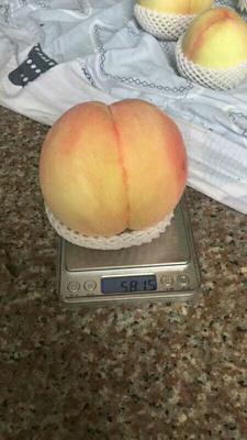 江苏省无锡市惠山区阳山水蜜桃 55mm以上 4两以上